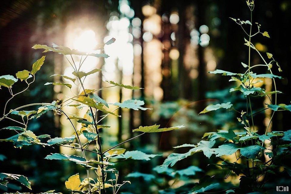 Blätter im Wald mit Gegenlicht