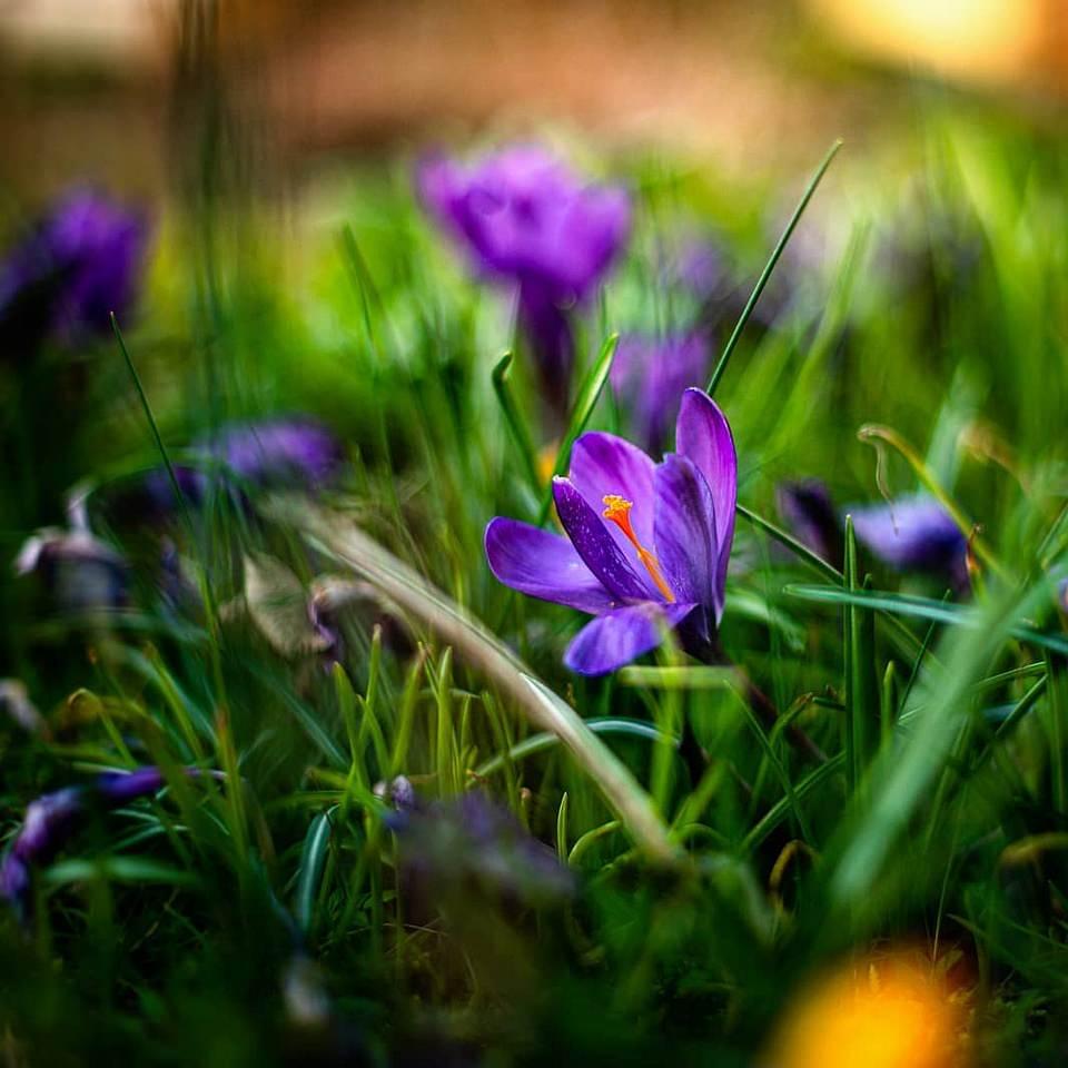 Blüten im Gras