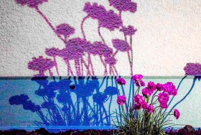 Blumen werfen einen Schatten