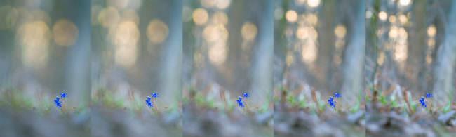 Blumen in verschiedenen Einstellungen fotografiert