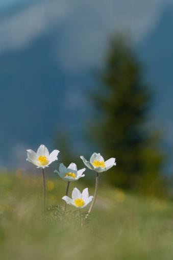 Blumen auf einer Wiese