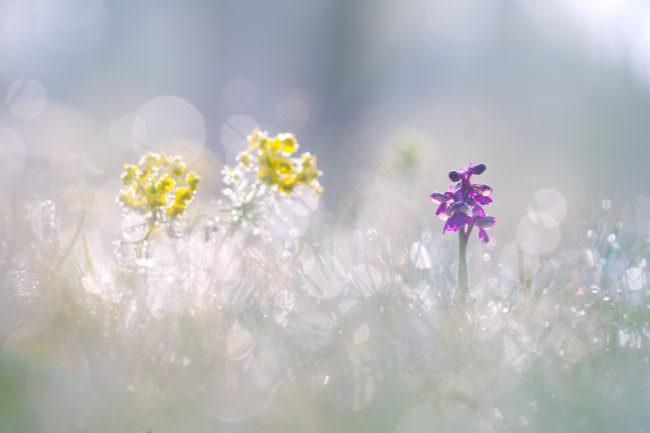 Drei Blumen auf einer Wiese