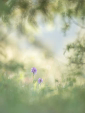 Zwei Blumen im Grünen
