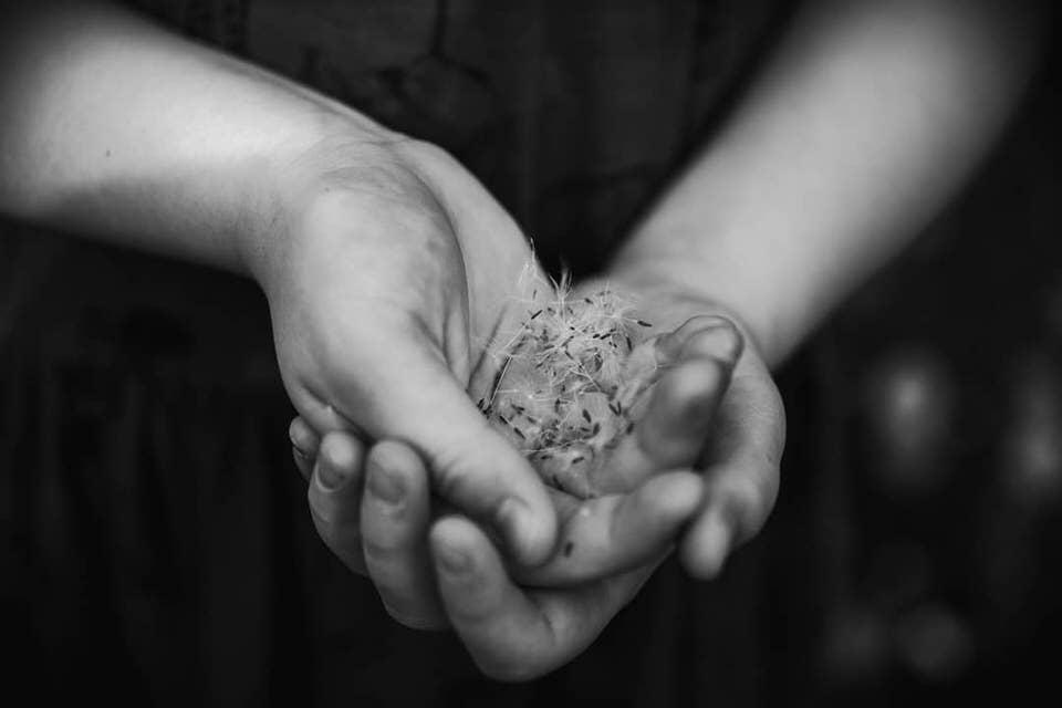 Pusteblumensamen in Händen