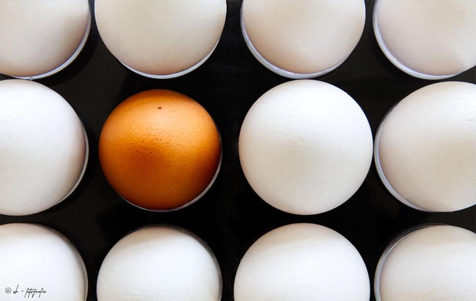 Ein braunes Ei zwischen weißen Eiern