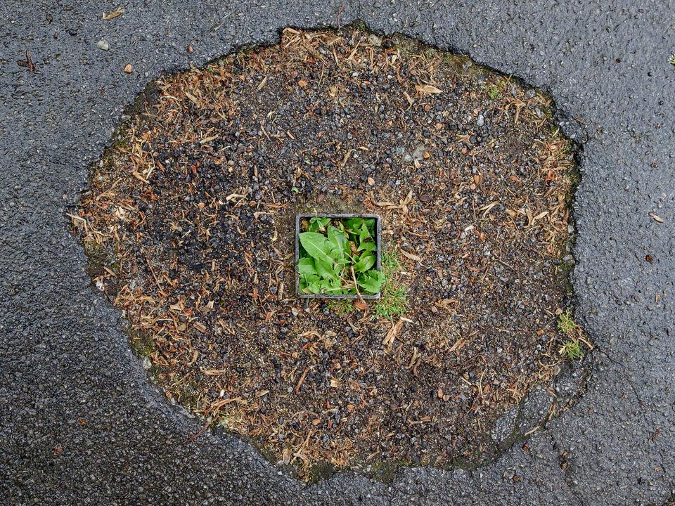 Unkraut wächst aus einem Loch für einen Pfeiler