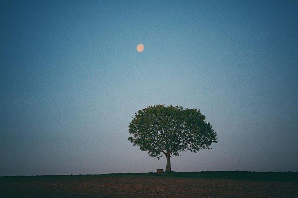 Landschaft mit einsamem Baum und Mond