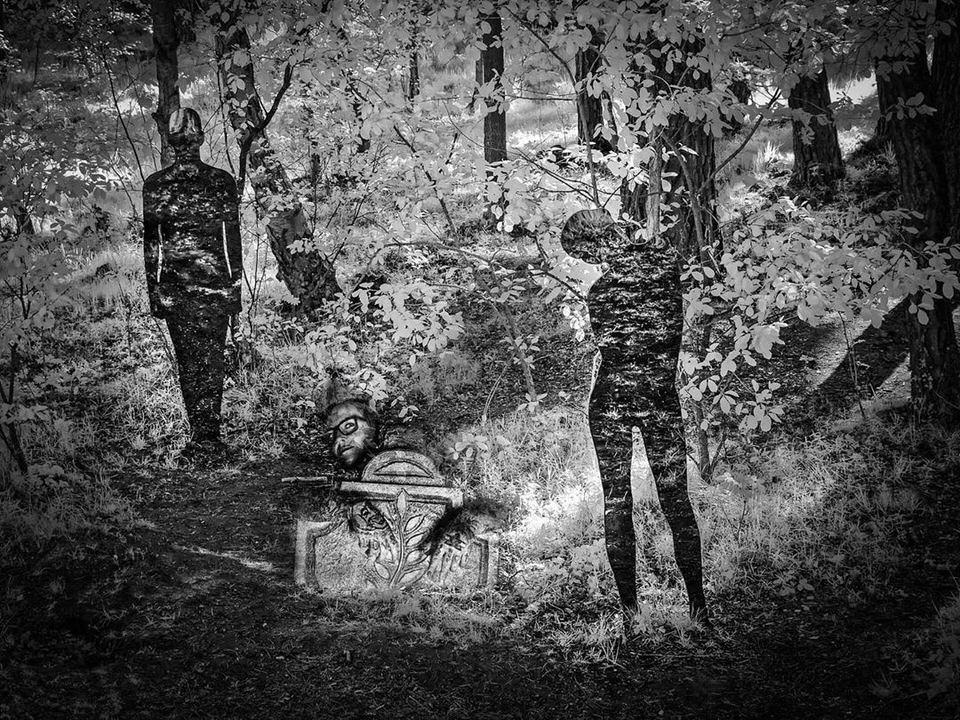 Surreales Bild im Wald