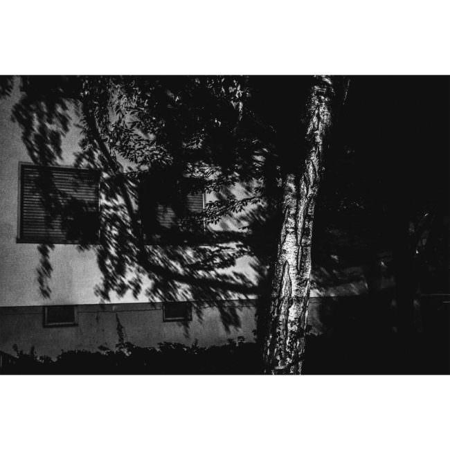 Ein Baum vor einer Hauswand bei Nacht