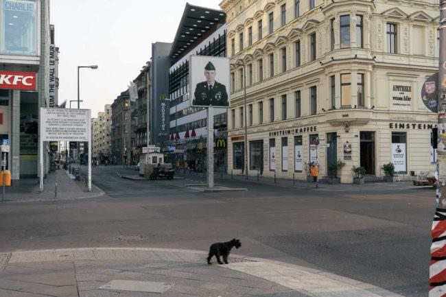 Ein Hund an einer leeren Kreuzung