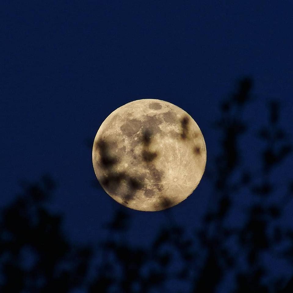 Mond teilweise verdeckt von Zweigen