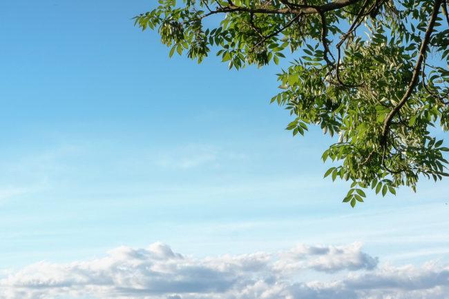Himmel mit Baum an der Seite