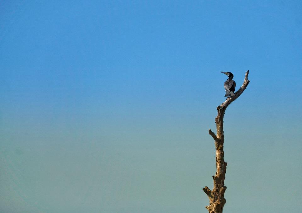 Vogel sitzt auf einem Ast vor blauem Himmel