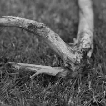 Holz im Gras