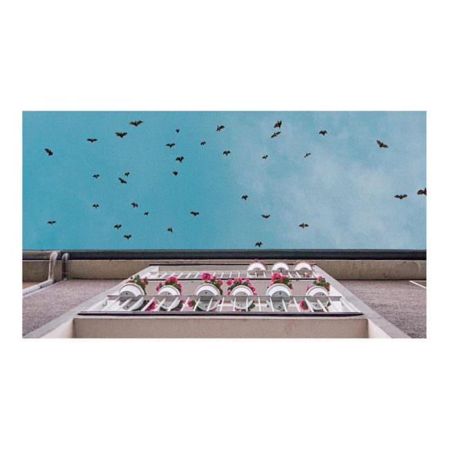 Blick nach oben zu einem Balkon und fliegenden Vögeln