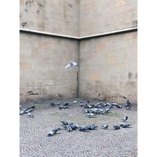 Tauben in einer Häuserecke