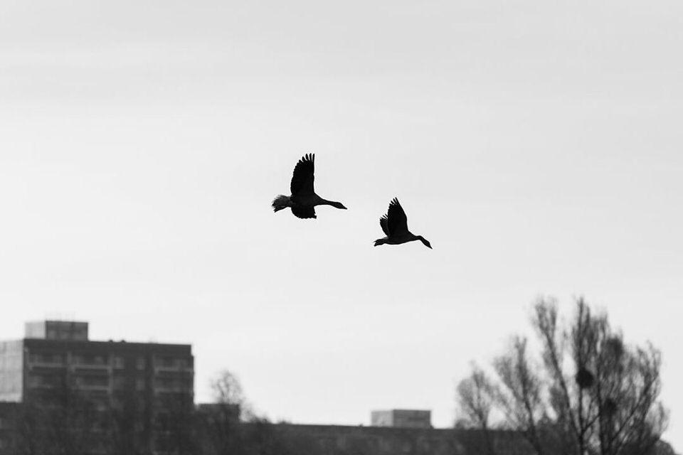 Zwei Vögel am Himmel über einem Haus