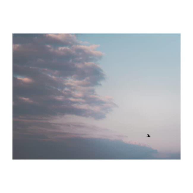 Vogel fliegt vor einem Sonnenuntergang