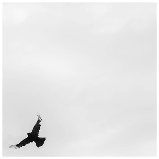 Vogel fliegt am unteren Bildrand