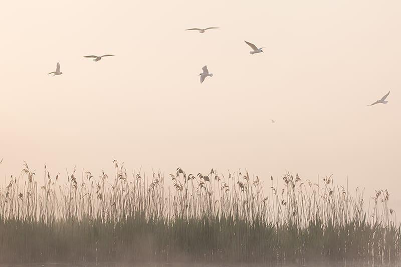 Vögel über einem Feld