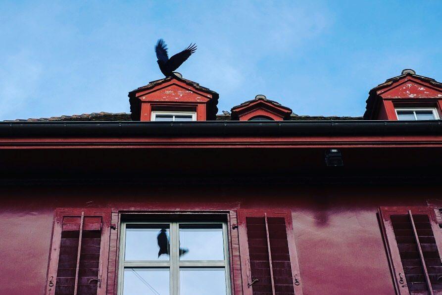 Vogel landet auf einem Dachfenster