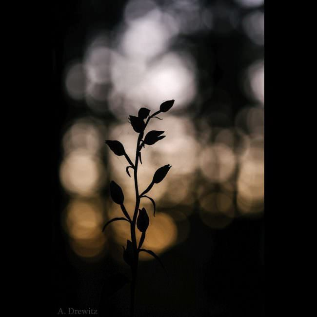 Silhouette einer Blume
