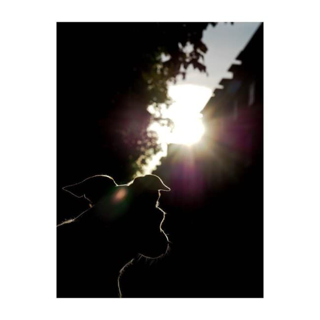 Hund sieht in die Sonne