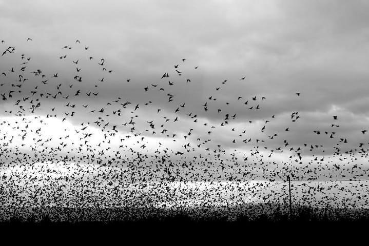 Vogelscharm im Gegenlicht