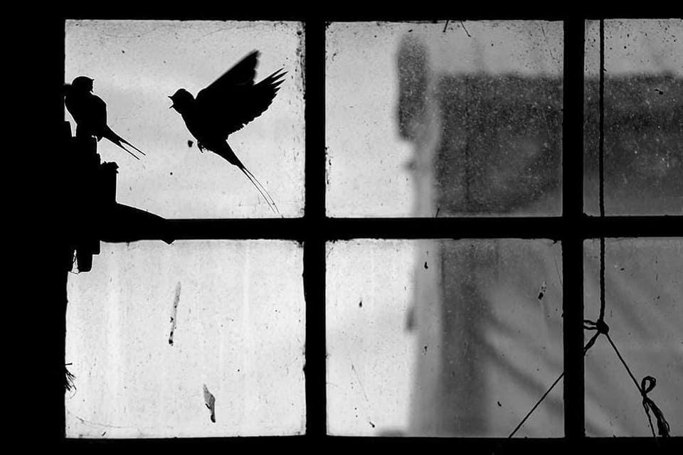 Umrisse von Vögeln vor einem Fenster