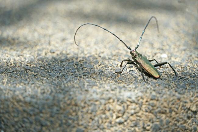 Käfer auf Beton