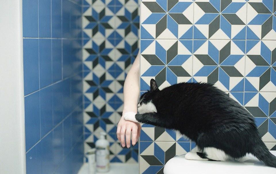 Eine Katze berührt eine Hand vor blauen Fliesen.