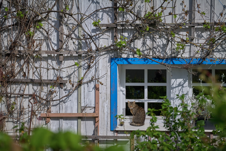 Katze auf einem Fenstersims