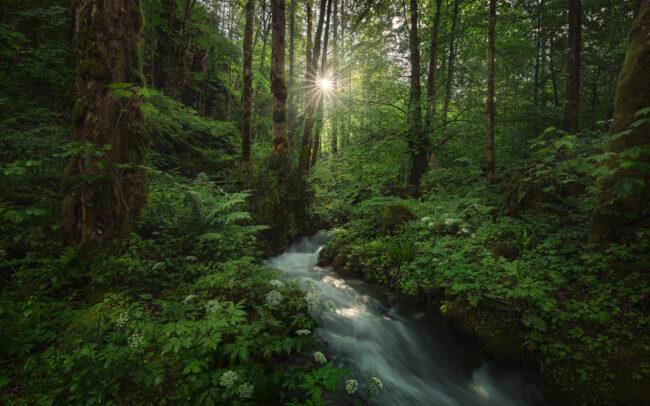 Kleiner Bachlauf in einem grünen Wald