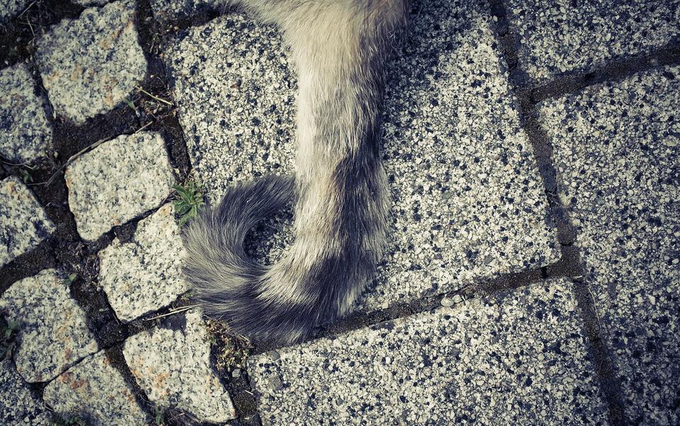 Der Schwanz eines Tieres auf Betonboden, der Rest des Tieres ist außerhalb des Bildrandes
