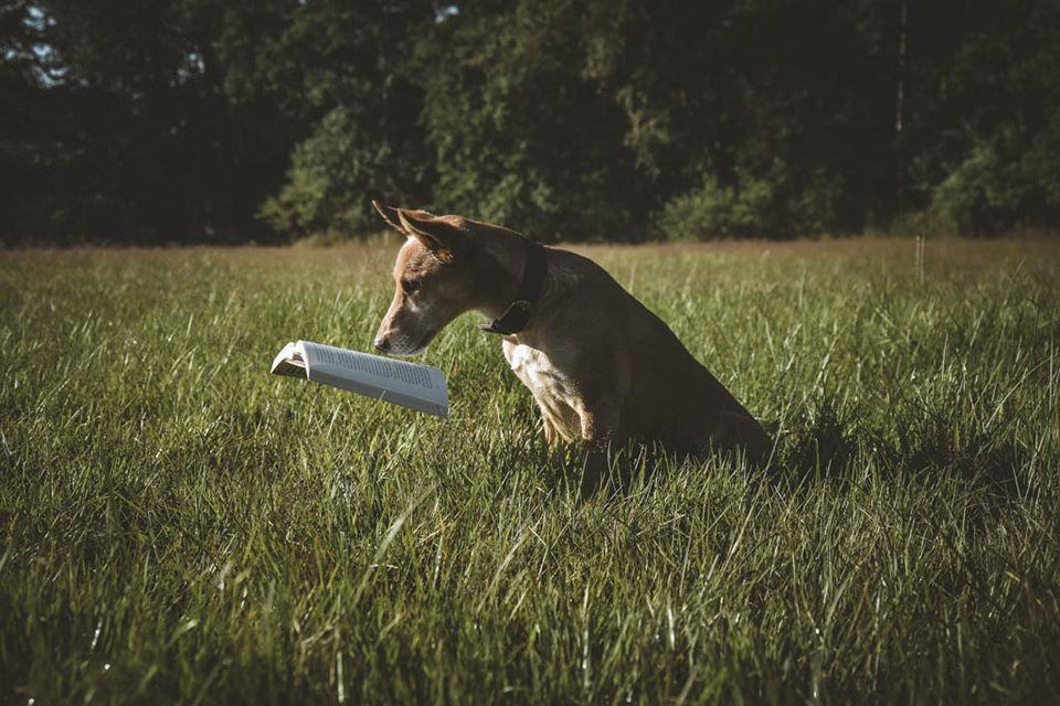 Ein Hund auf einer Wiese liest ein Buch, das in der luft schwebt