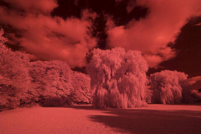 Wiese und Baum in roten Farbtönen