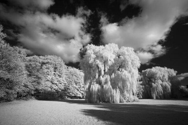 Wiese und Baum in Schwarzweiß