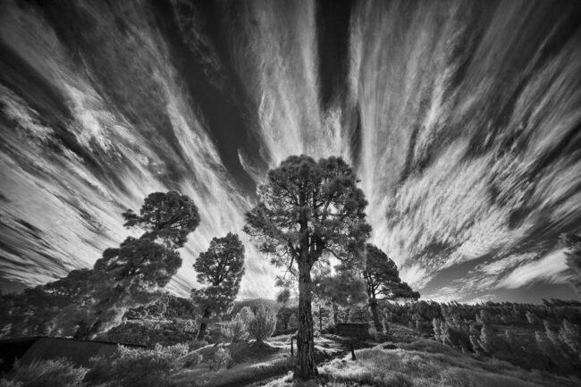Schwarzweißaufnahme von Bäumen und langgezogenen Wolken