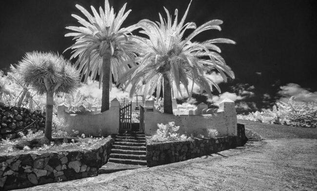 Tor mit Palmen, die weiß wirken. Der Himmel scheint schwarz
