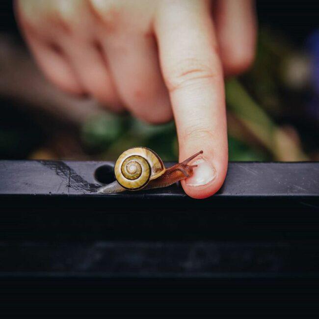 Ein Finger wird vor eine Schnecke gehalten