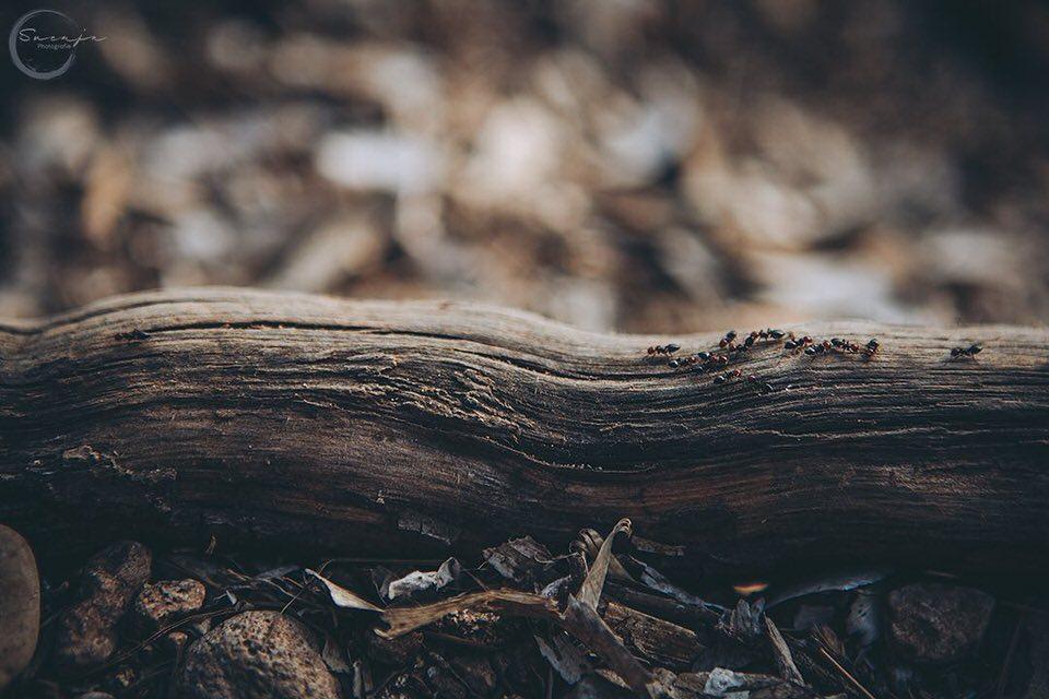 Ameisen auf einem Baumstamm