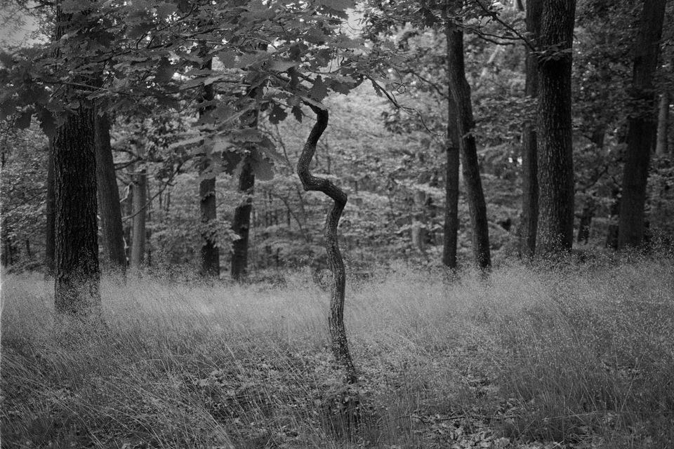 Krummer kleiner Baum im Wald