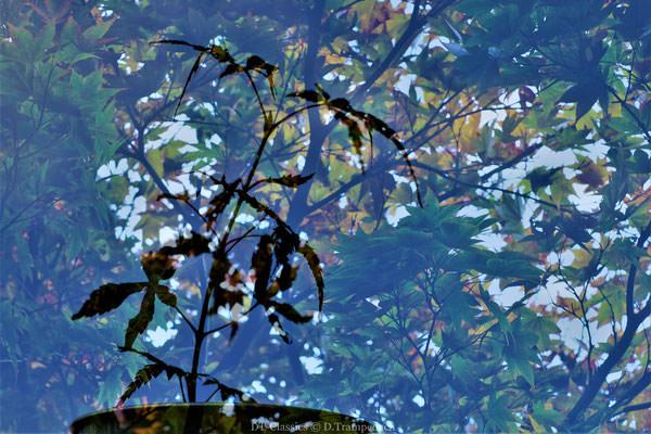 Zweige reflektieren in einer Scheibe
