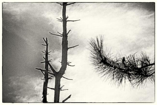 Kahle Äste vor Wolken
