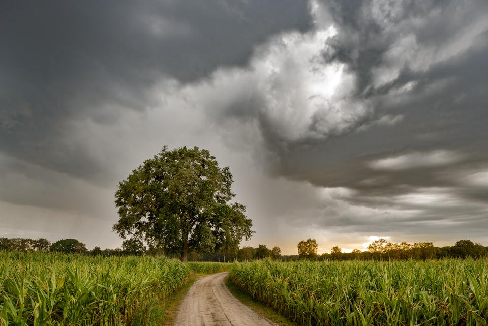 Ein Feldweg führt zu einem großen Baum