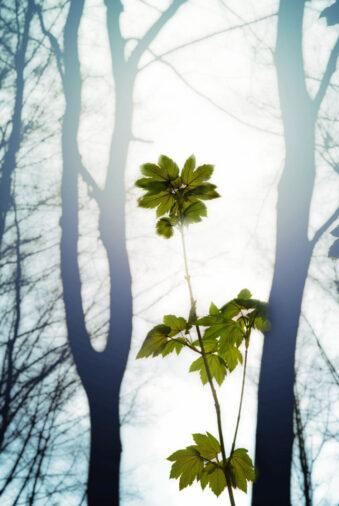 junges Bäumchen im Wald