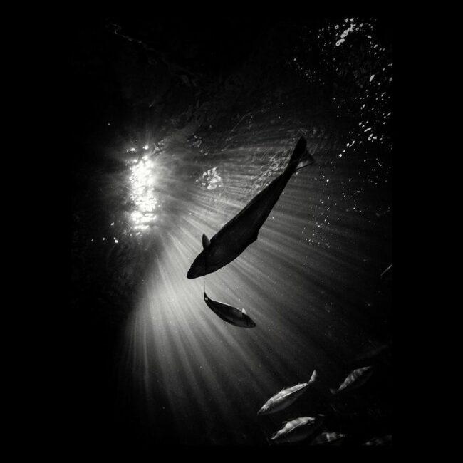 Fische Unterwasser in einem Lichtschein