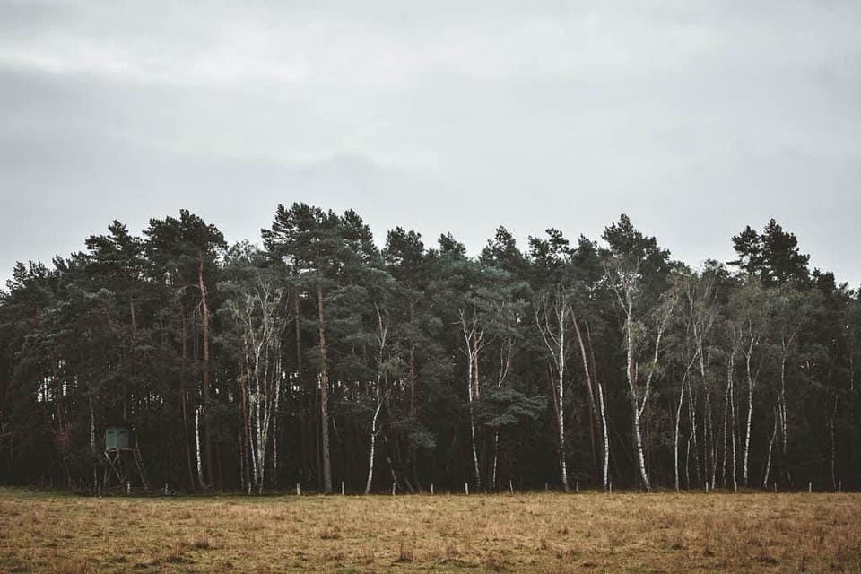 Feld im Vordergrund, dahinter eine Gruppe Bäume