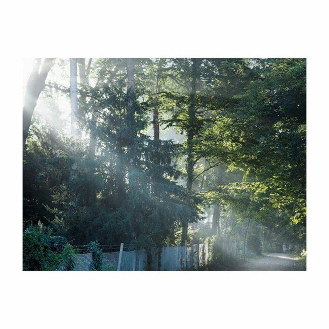 Ein Lichtschein fällt durch einen Wald