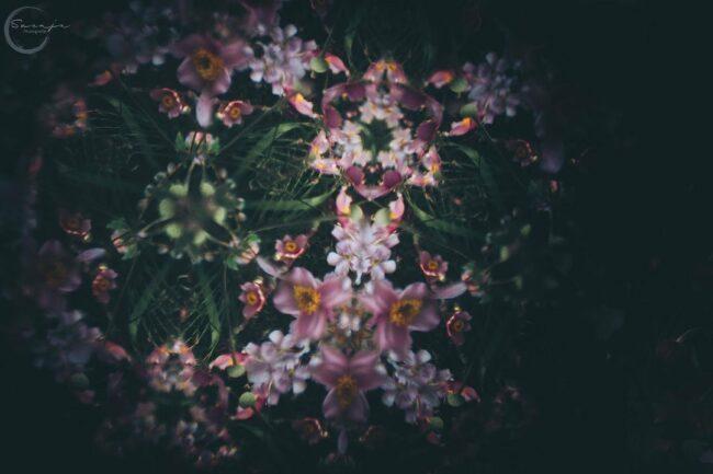 Blumen mit Kaleidoskopeffekt